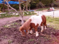 Pony_3