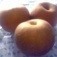 千葉県鎌ヶ谷産の梨